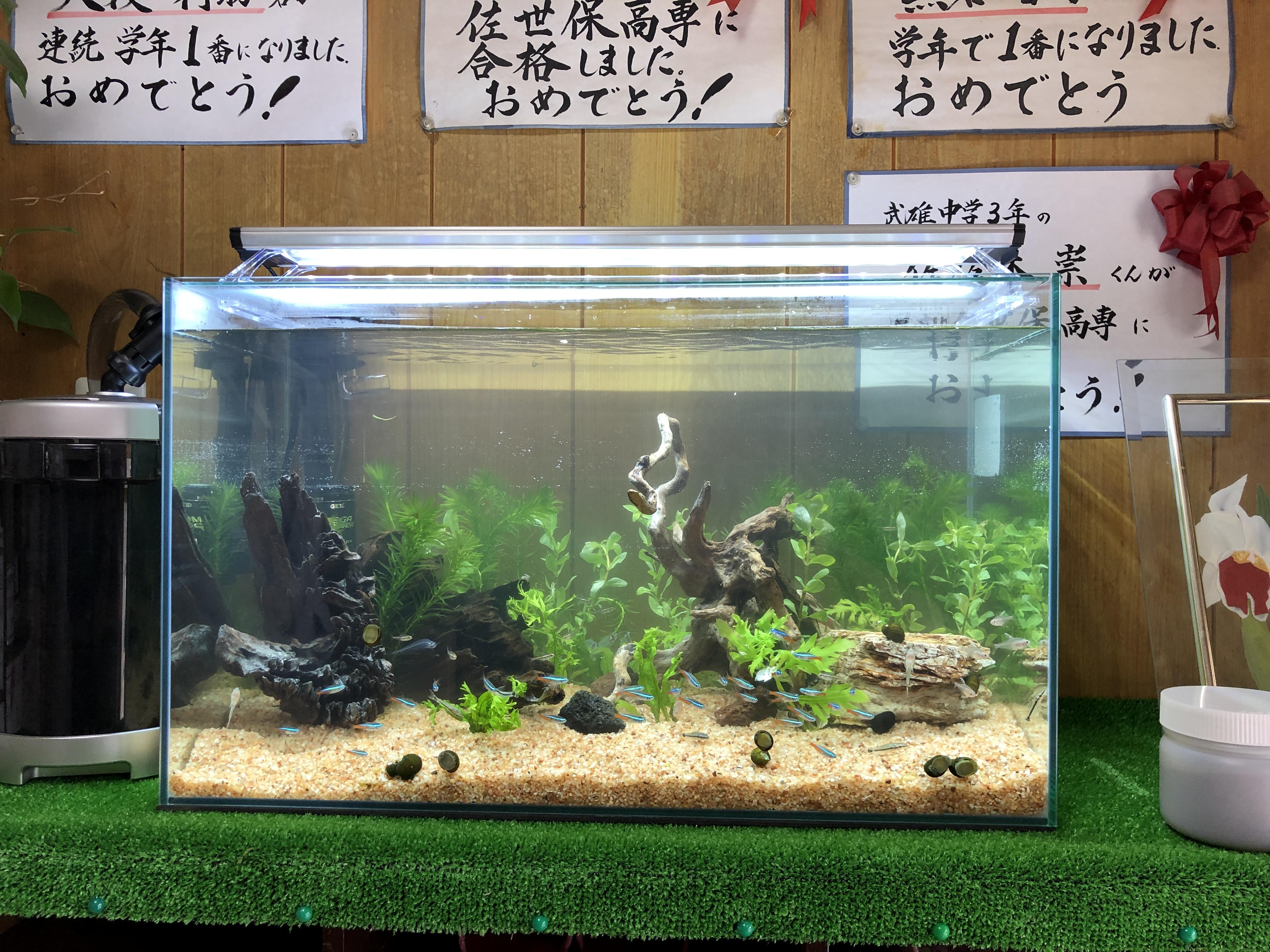 昨日は佐賀県武雄市内の学習塾にアクアリウム導入!