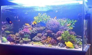 珊瑚水槽メンテナンス